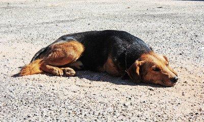 Χρηματοδότηση σε Δήμους και Συνδέσμους Δήμων για καταφύγια αδέσποτων ζώων